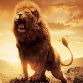 WE ARE ALL BORN A LION