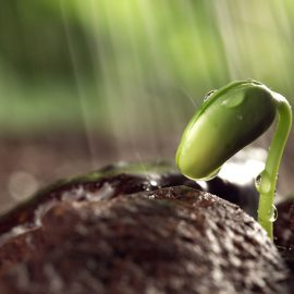 To See Things in the Seed, that is Genius -Lao Tzu