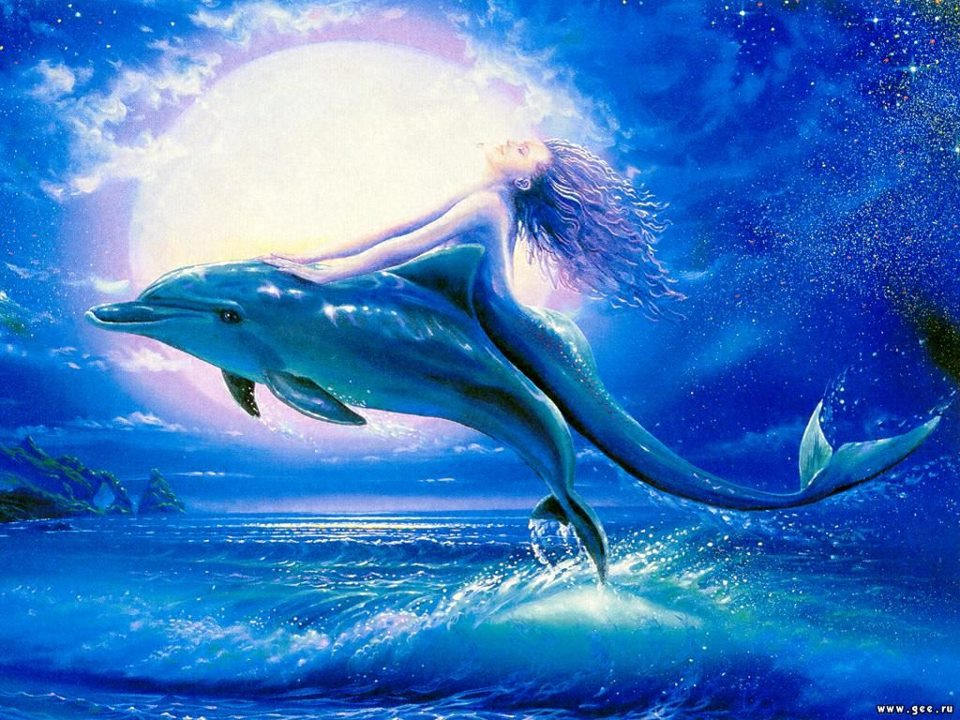 Mermaid dolphins