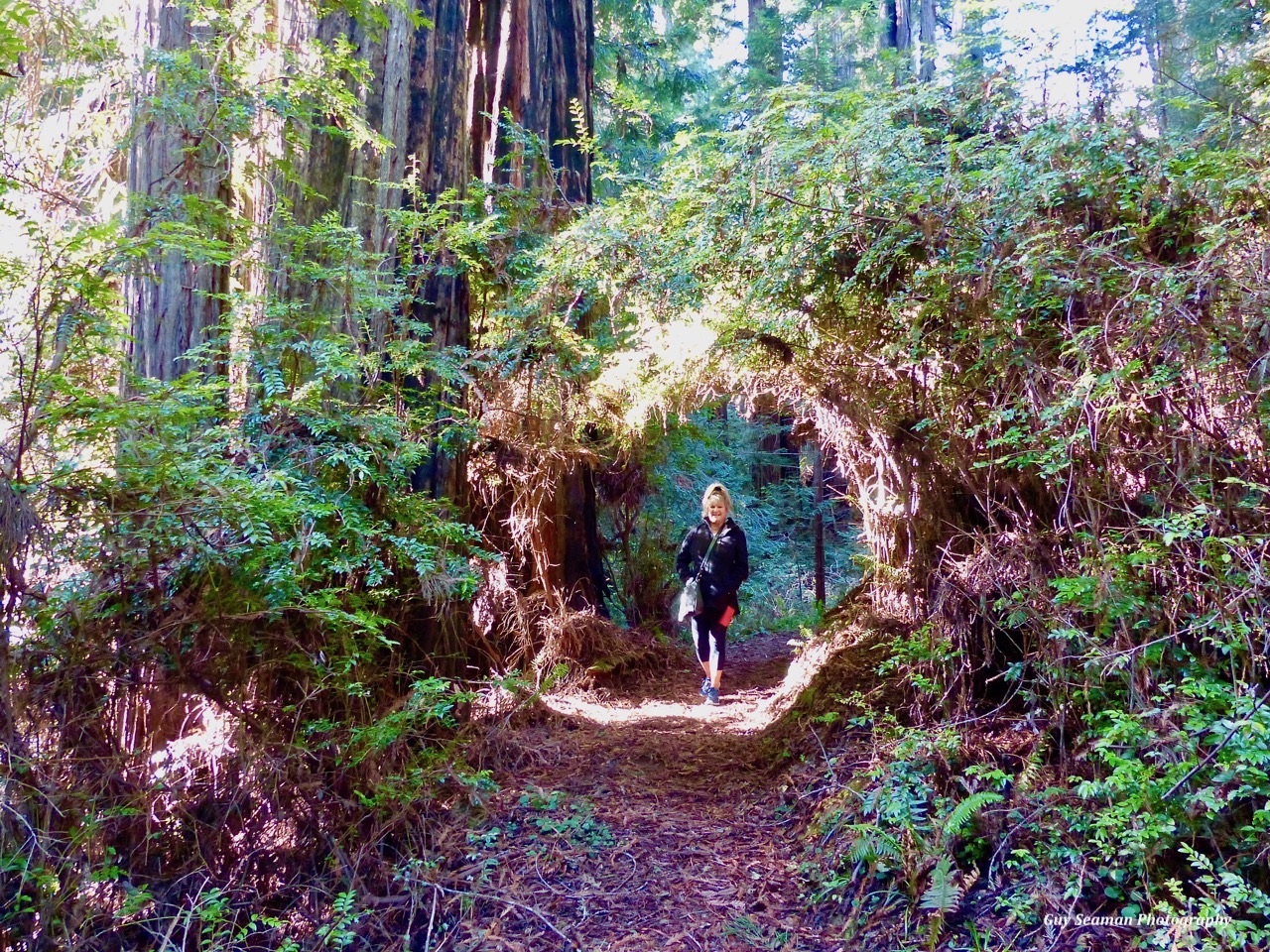 forest portal