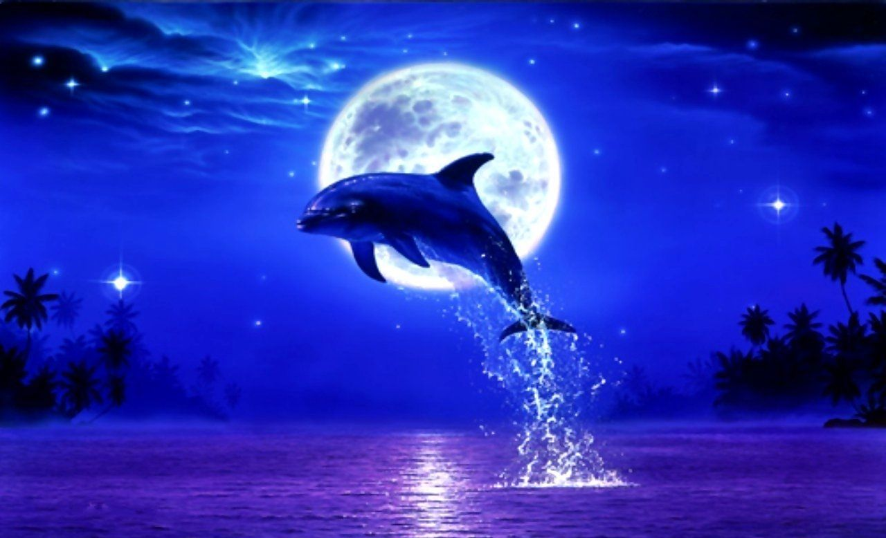 Dolphin full moon