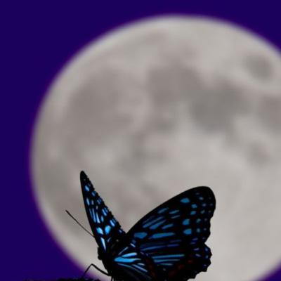 Butterfly Full Moon