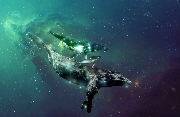Etheric Whales