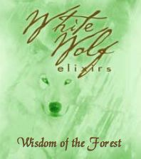 Wisdom of the Forest Oil