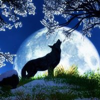 January 1st – 2nd  Full Moon Ritual dedicated to the spirit of Wolf