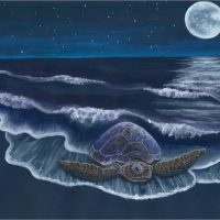 September 1st/2nd – Full Moon Meditation Dedicated to Honu