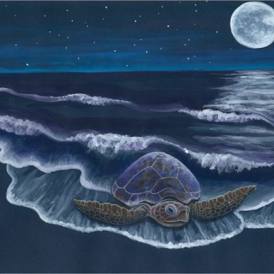 Honu full moon