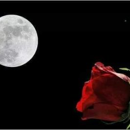 May 29th/30th –  Full Moon Dedicated to The Rose