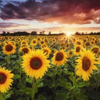 June 21st – Northern Hemisphere – Summer Solstice known as Litha