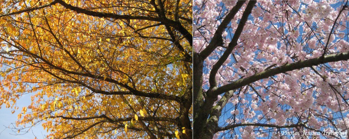 fall and spring