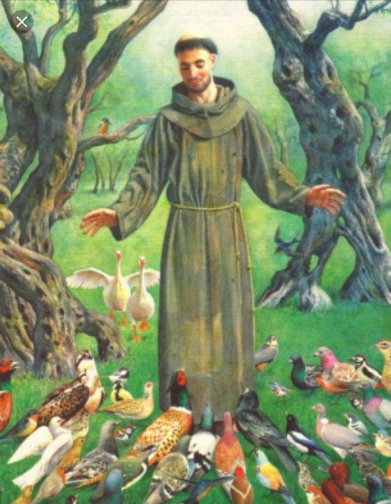 francis and birds
