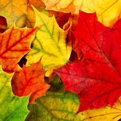 leafs changing colors