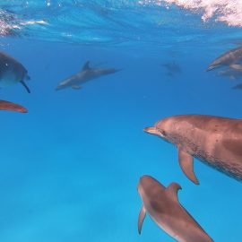 WildQuest Dolphins