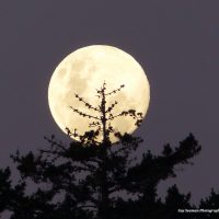 December 11th Full Moon