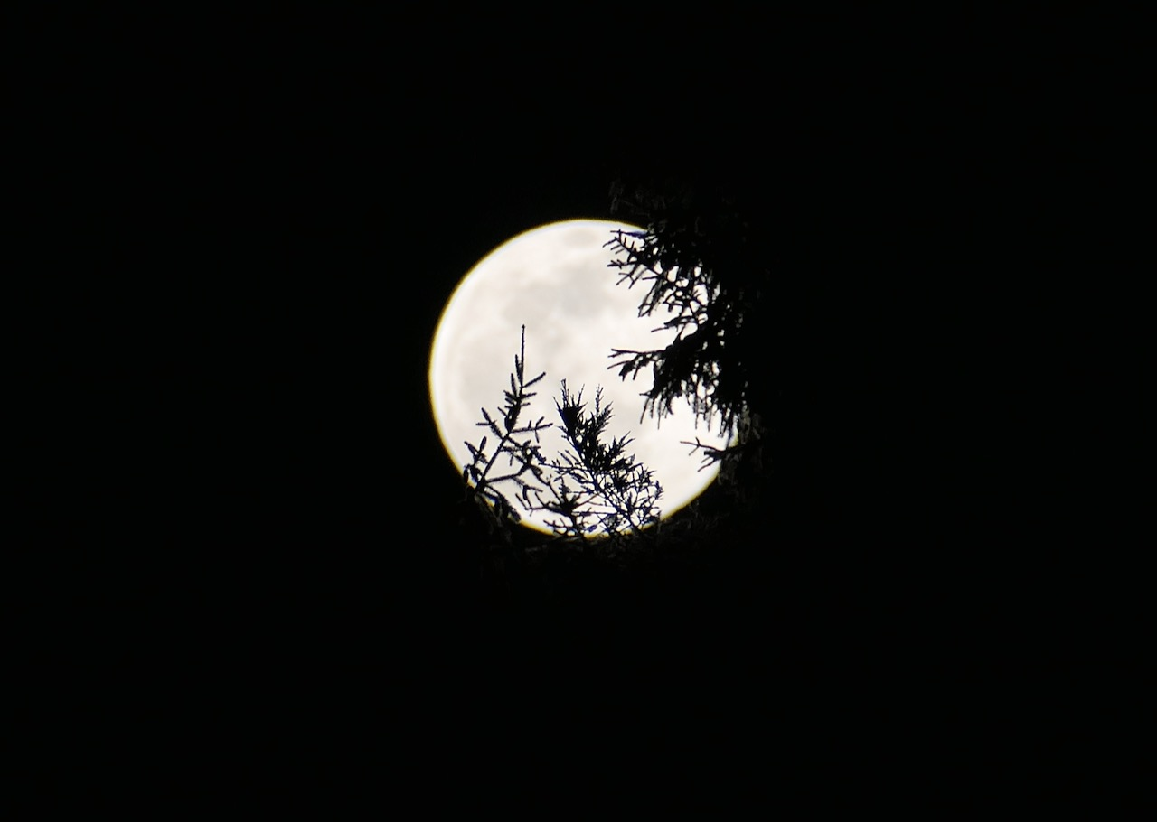 Forest full moon