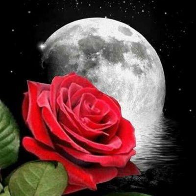 rose full moon