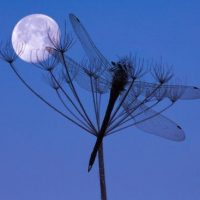 August 22nd/23rd Aquarian Moon of the Dragonfly Meditation